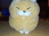 Beute - Mi-Li (das neue Haustier)